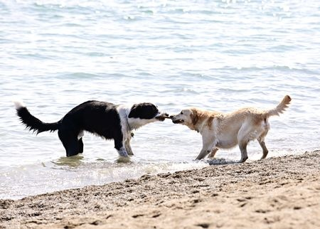 Two dogs playing symbol of Sales and Marketing Tug of War
